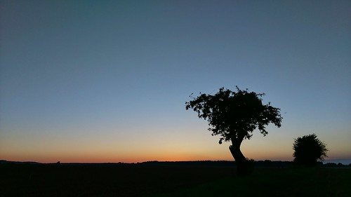 sunset silhouette tree tranquilscene landscape tranquility copyspace scenics clearsky beautyinnature nature field growth blue branch outdoors singletree dark outline remote