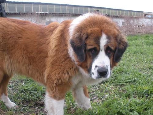 Moscow watchdog Gaia