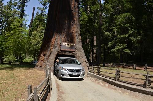 Day 16 - Drive-Thru Tree Park at Chandelier Tree in Leggettt | by Luiz Kessler