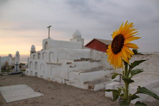 Sunflower at the Cemetery | by Geraint Rowland Photography