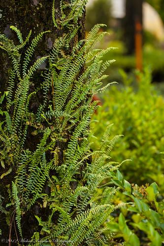 flowers fern moss