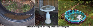 Standing Water Risk: Bird Baths, Children's Toys & Pools | by fairfaxcounty