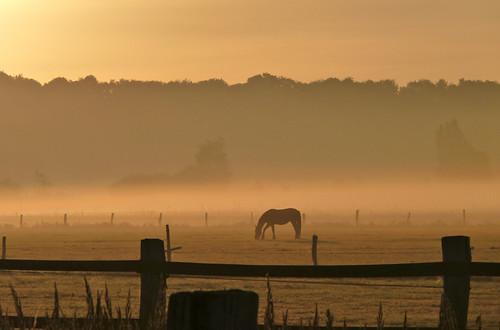 morning horse fog day nebel natur wiese morgen sabine1955 panoramafotográfico
