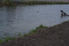 along the Royal Canal, Dublin
