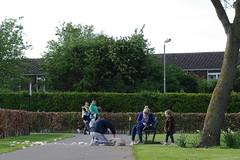 brushing the dog, Pope John Paul II Park, Dublin