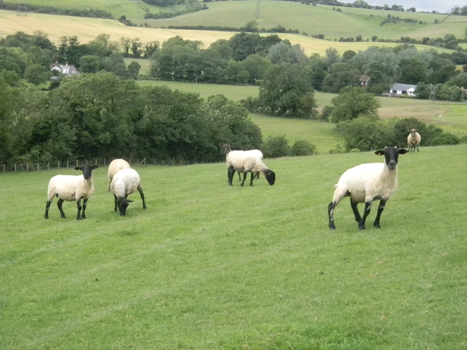 Sheeps Sandling to Wye