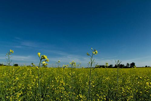 sky ontario canola southernontario wellingtoncounty dje canoneos7d djengland djenglandphotography douglasjengland canonefs1585f3556