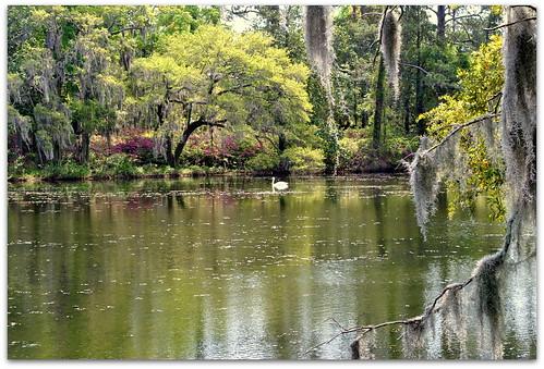 swan northcarolina wilmington airliegardens