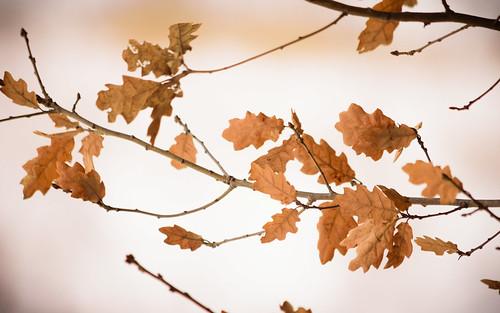 Leaves in February 2018