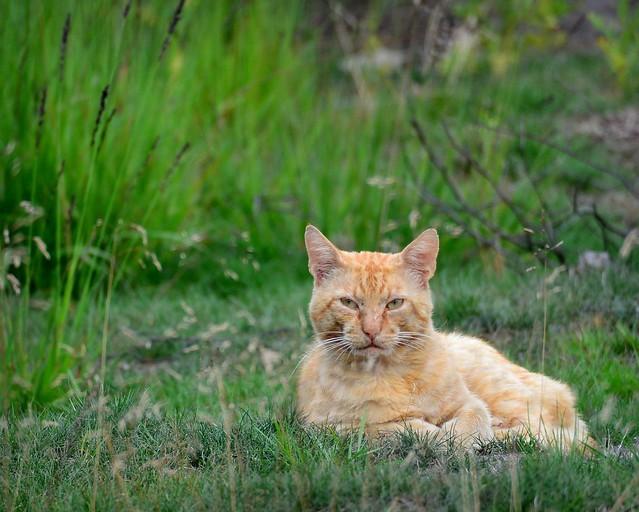 Tracking cats II