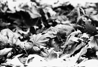 Olympus Om4ti + Olympus 50mm 1.4. Ilford Pan400. Kodak d76 - Ilfostod - Ilford Fixer - Kodak Photo Flo 200. Canon Canoscan 4200F. | by -daniska-