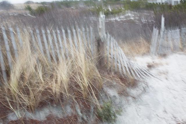Barnegat Light Dunes