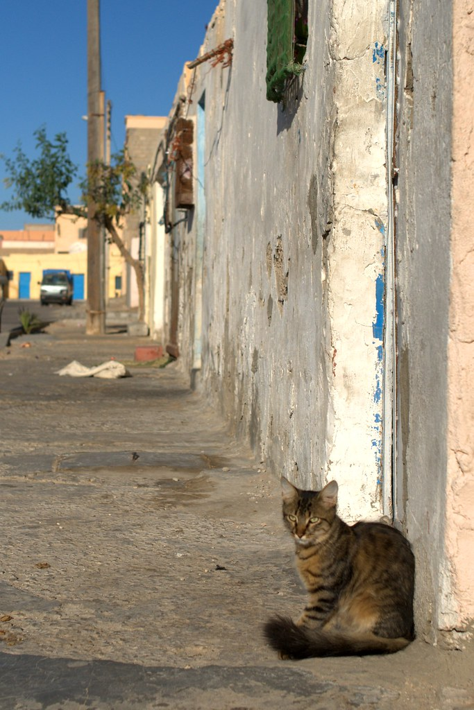 Laayoune Chat
