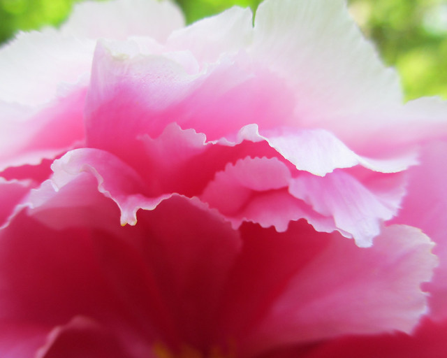 Shades of pink edges