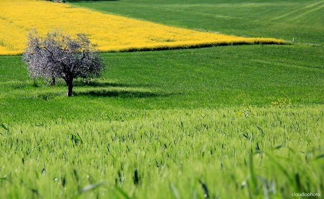 spring harmony  -  On explore # 43