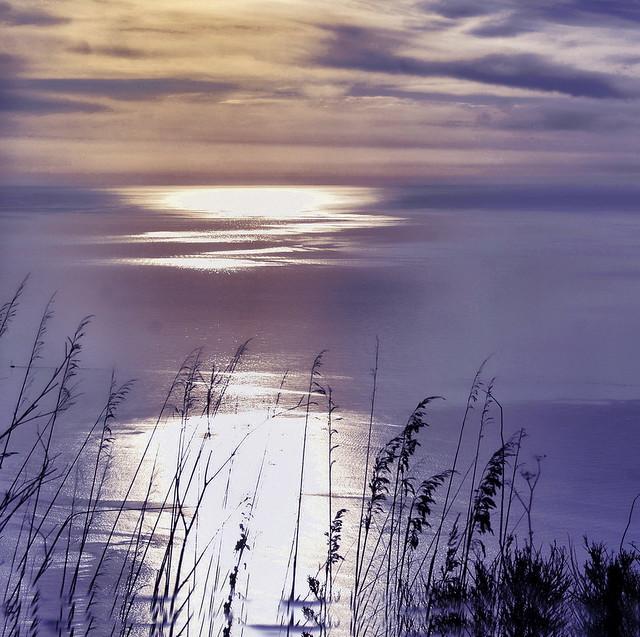 Softness the gold  coast