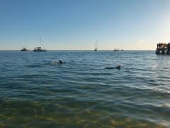 do, 05/07/2012 - 03:02 - 091. Dolfijnen bij de boot op Monkey Mia