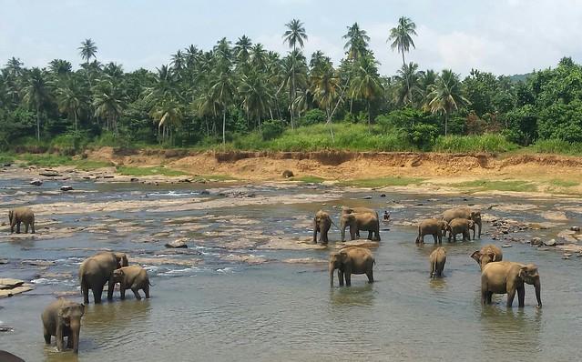 Pinnawela, Sri Lanka, August 2016, 20160808_105914-1-1