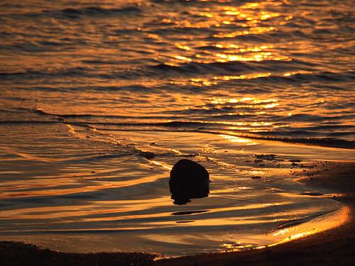 trip orange macro water colors field yellow mi reflections golden spring waves metallic lakemichigan workshop eastbay traversecity traverseareacameraclub june2012