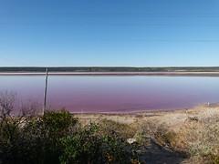 wo, 23/05/2012 - 09:59 - 029. Rose water, van een algensoort, bij Dongara-Port Denison