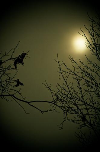 ohio sun tree nature nikon branch glow bare nikkor vignette oval againstthesun wintersville 18200mmlens d7000 truebritgal