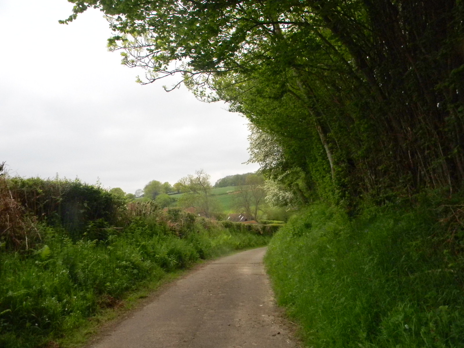 Leafy road Cowden to Eridge