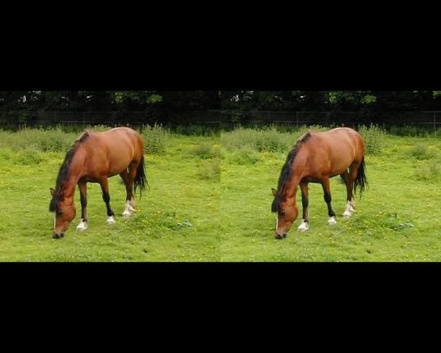 Horse feeding in a field - 3d movie clip - crossview