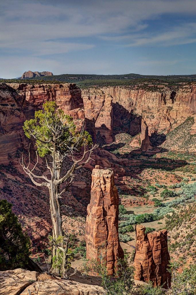 Tree & Spider Rock Overlook by Brian Callahan (Luxgnos.com)