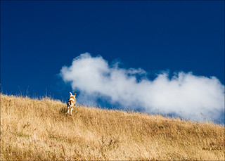 Dog running to clouds  (May 2011) | by ejbSF