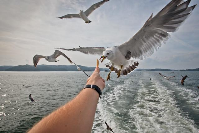 Birds at 17mm