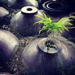 みどり・Green. #blk_rocket #photooftheday #bestoftheday #er_photo #green #常滑