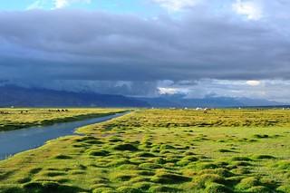 Golden marsh wetland | by llee_wu