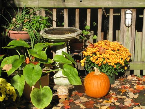 Garden in autumn   by kbowenwriter