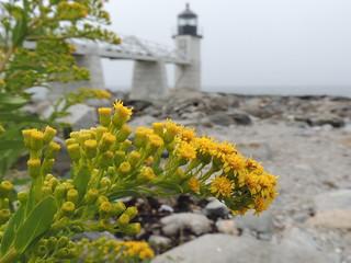 Seaside Goldenrod | by Anita363