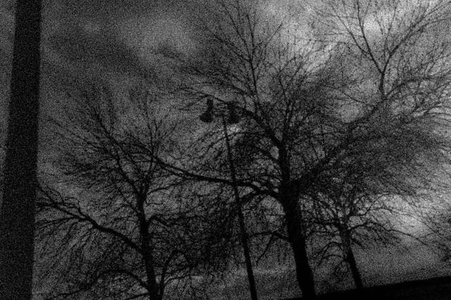 trees thinking