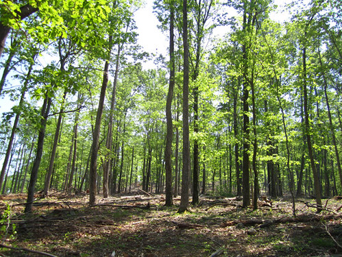 Selectively harvested hardwood stand.
