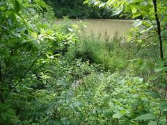 Pond Flow
