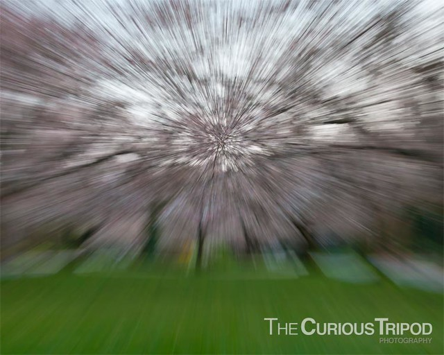 Cherry Blossom Abstract