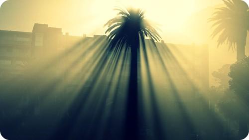 light sunlight tree nature sunshine sunrise shadows capetown rayoflight hss
