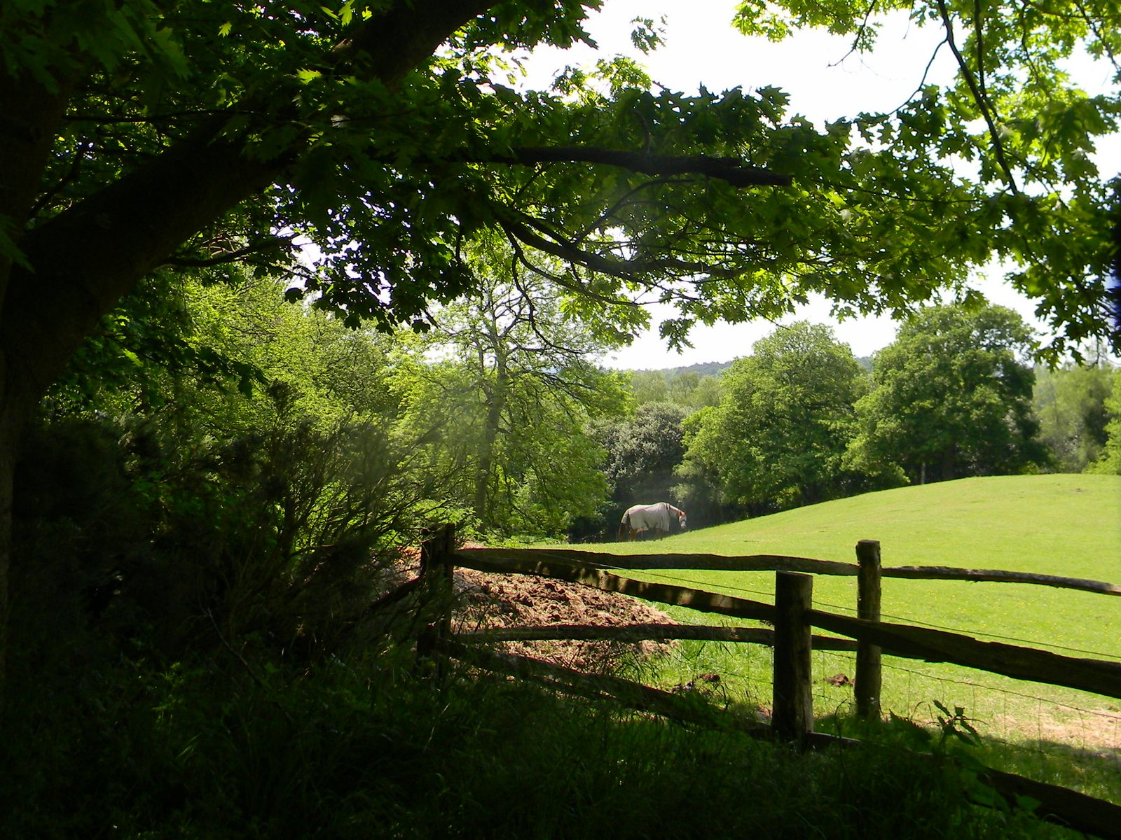 Bit of a hill past a fence Farnham Circular
