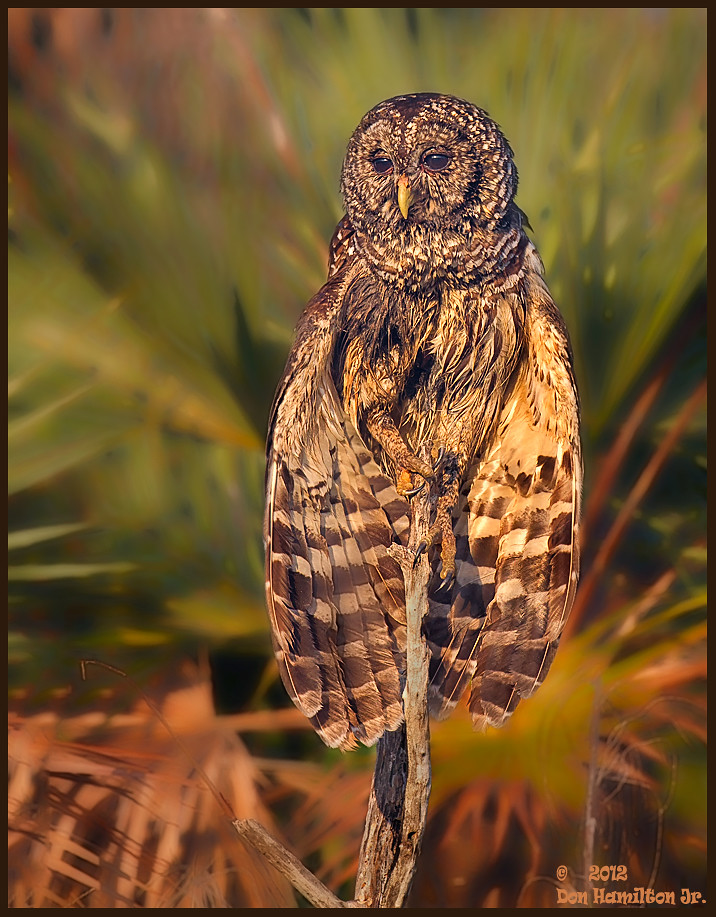 Owl forum