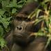 Na návštěvě u horských goril, foto: Daniela Hranaiová, Člověk v tísni