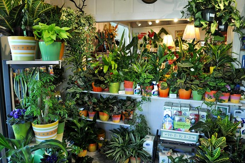 More new houseplants, April 23rd   by The Greenery Nursery