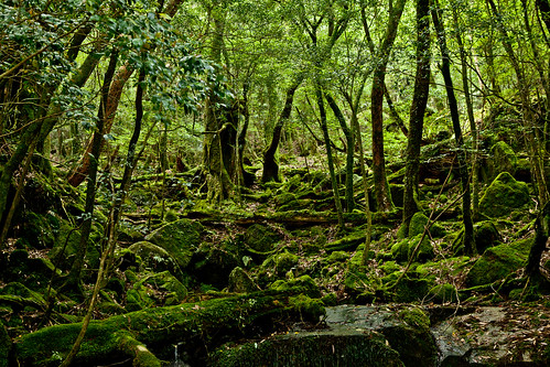 Yakushima, Japan-15-2012 | by Hakuei_Photo (please critique my works)
