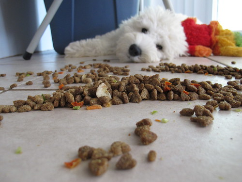 Dog played with his food. | by BuzzFarmers