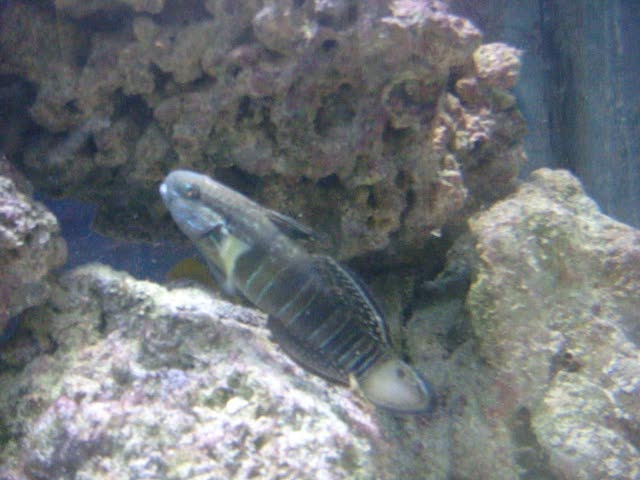 Fish video - 7 July 2012