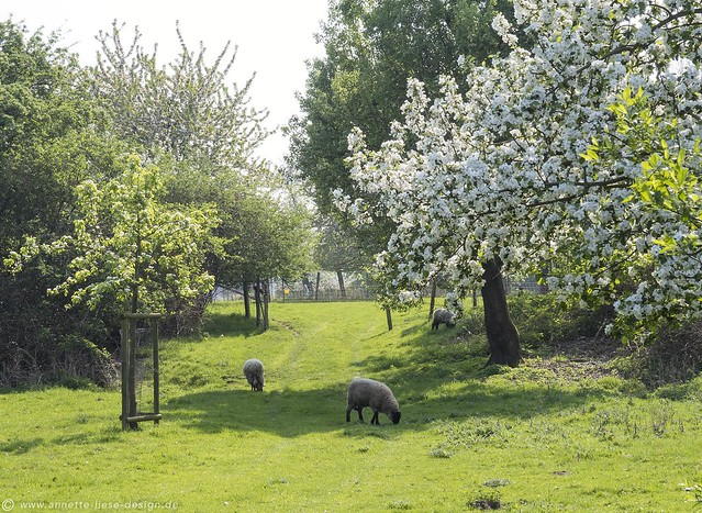 Streuobstwiese / Meadow orchard 11