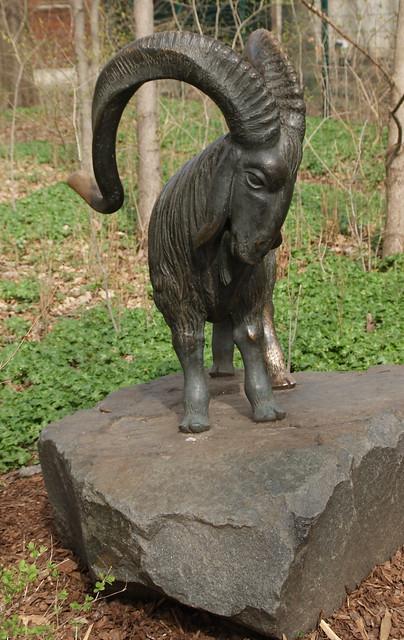 Angora-Ziegenbock