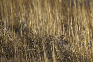 In the Tall Grass | by Clare Kines Photography