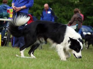 Brabyns Championship Show 2012 | by Chadkirk Dog Training Club